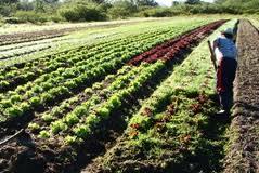 Agricultores com atividade comercial têm de declarar o início de atividade ou podem ficar sem subsídios